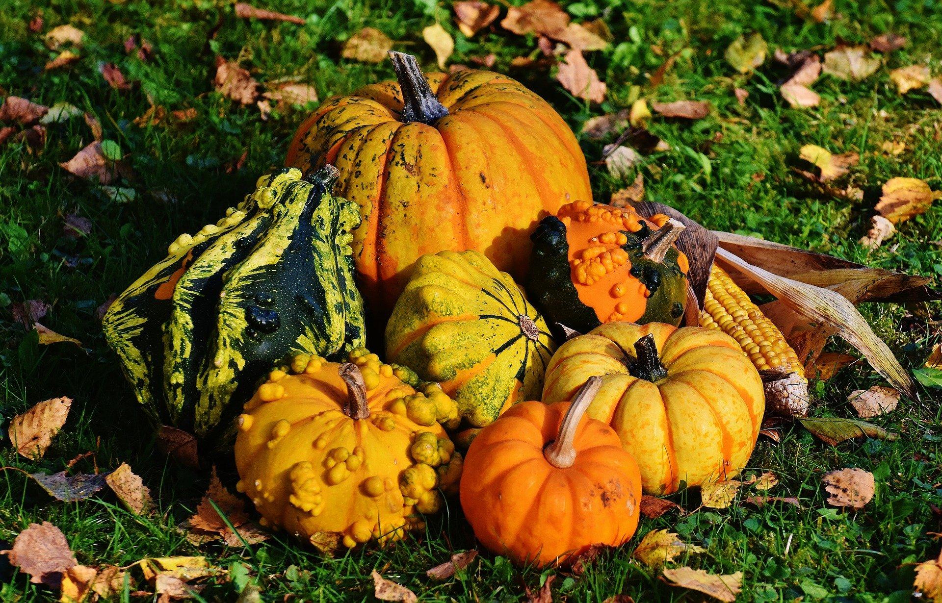 Celebrate the Fall Season
